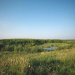 Syncrude recognized for reclamation design