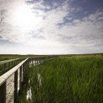 Header Image - Mildred Lake
